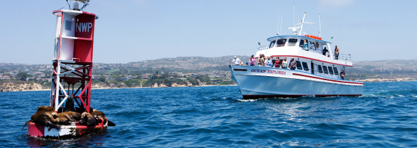 inexpensive-whale-watching-tour-southern-california
